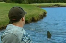 WATCH: Sharks infest golf course water hazard