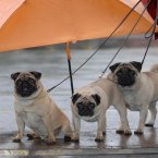 Jack, Jill and Jason brave the rain. Image: David Jones/PA.