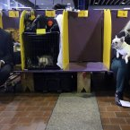 Handlers sit in the benching area with their dogs (AP Photo/Mary Altaffer)