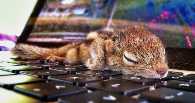 14 ways Rob the tiny squirrel won over the internet