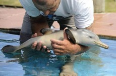 Watch this baby dolphin thank the fisherman that frees it from a plastic bag