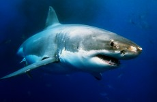 Shark attack kills teenager in Australia
